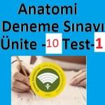 Anatomi-Deneme-Sınavı-Ünite-10-Test-1