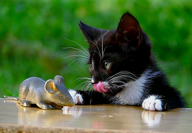 Cat and Stale Mouse