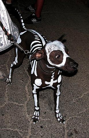 Awesome Dog Skeleton Halloween Costume
