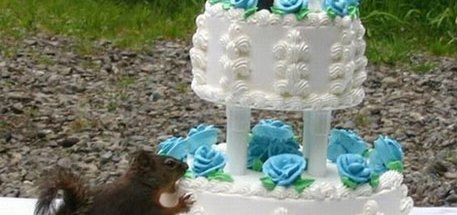 Squirrel Eating Wedding Cake