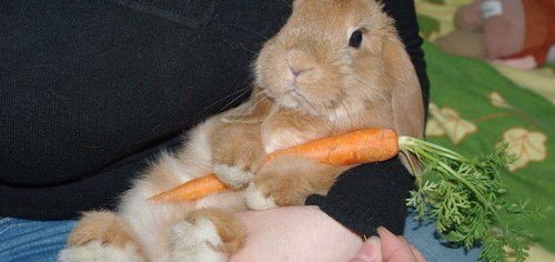 Some Bunny Loves His Carrot