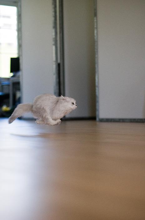 Cat So Fast, It Defies Gravity