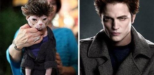 The True Identity of Edward, He's A Cat