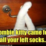 LOL Zombie Cats Steal Socks