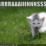 LOL Zombie Cats - BBBBRRRRAAAIIINNNSSSS