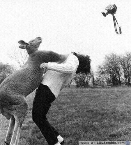 Kangaroo Hitting Lady