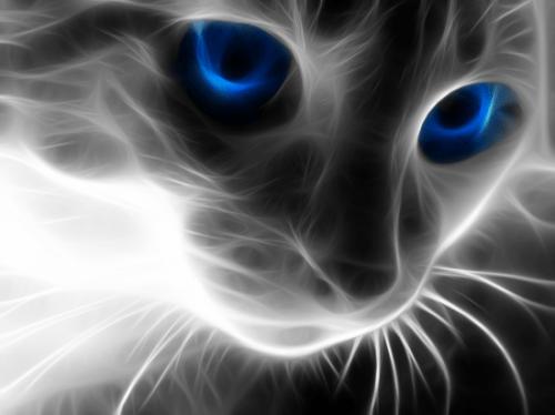 Glowing Cat