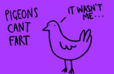 Did You Know Pigeons Can't Fart?