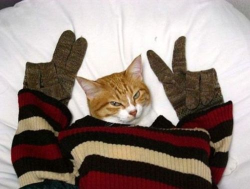 Cold Kitty Says Peace