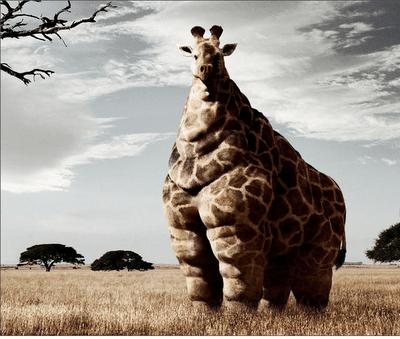 Mommy Rino and Daddy Giraffe Made A Gino
