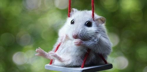 Even Cute Mice Like To Swing