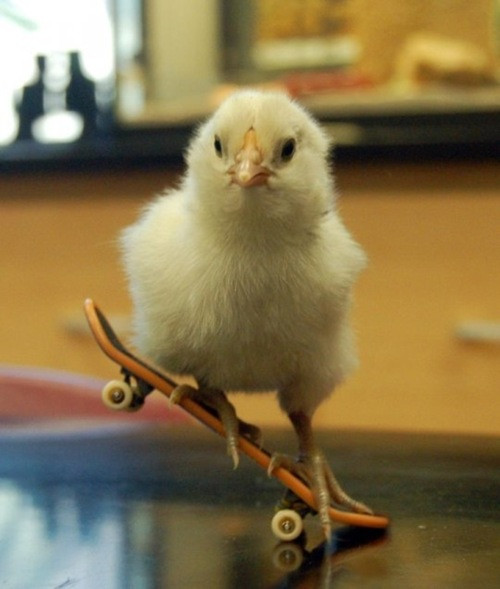 Sk8er Chick