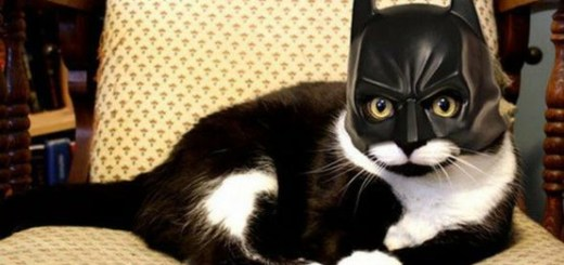 Look! On the chair! It's Batman cat.
