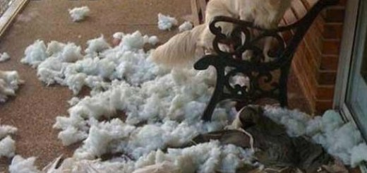 Dog Killed Pillow