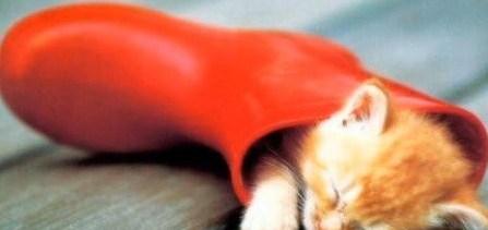 Safe Sex Kitty