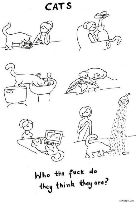 Stupid Cats