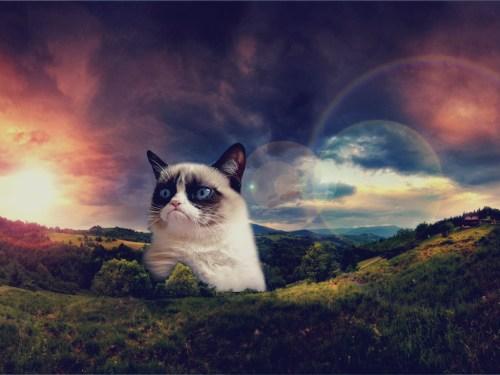 Cat Wallpaper by ~SottoPK on deviantART