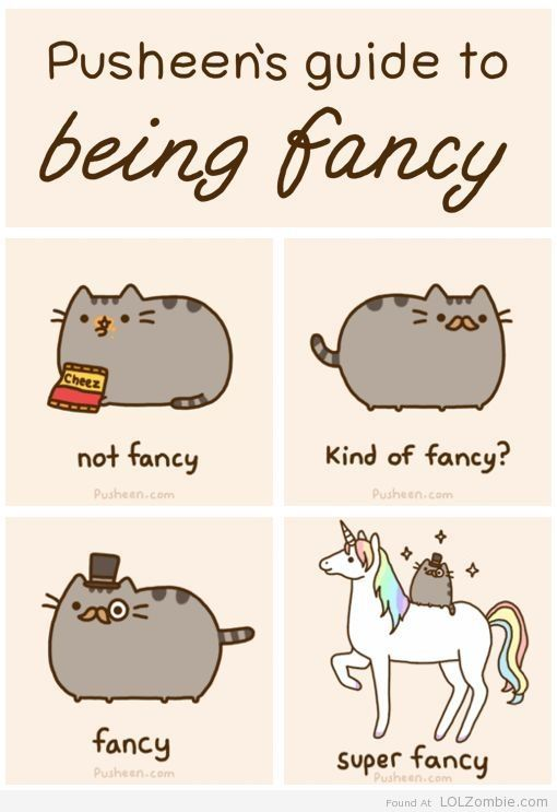 Fancy Cat