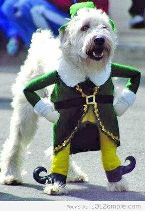 St Pats Puppy