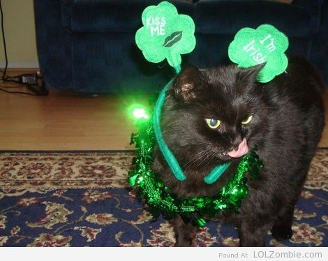 St Patricks Day Cat