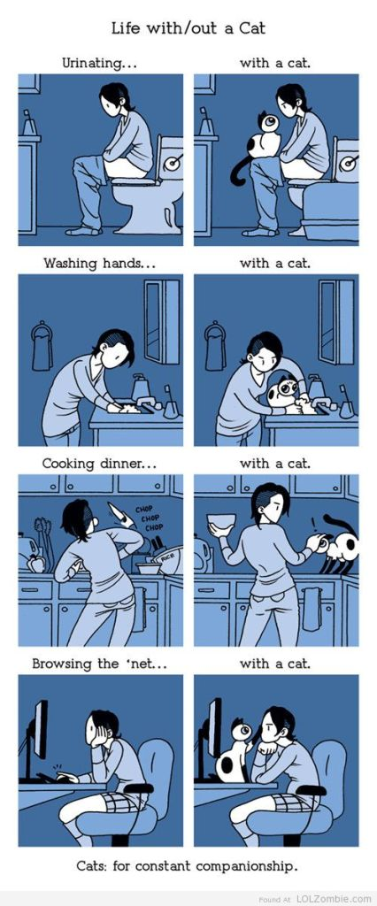 Life With-Without A Cat