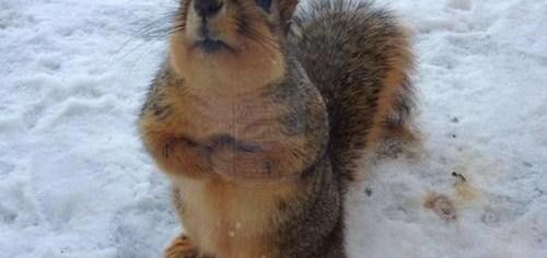Squirrel Frozen Nuts
