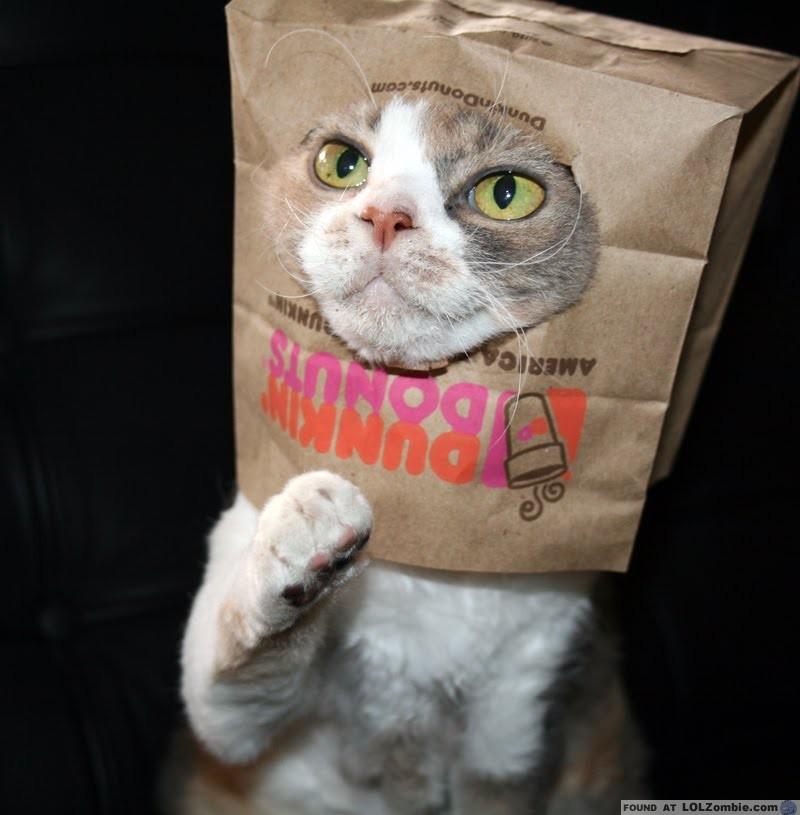 Dunkin Donut Cat