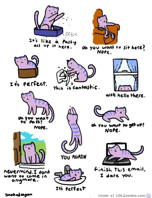 Cat Thoughts