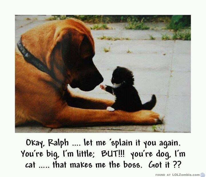 Kitten Boss