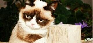 Grumpy Cat Neighbor