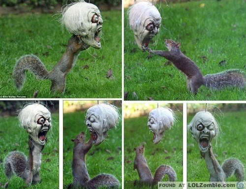Squirrel Scary Mask