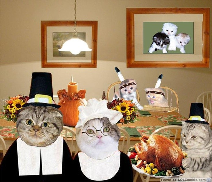 Image result for thanksgiving cat