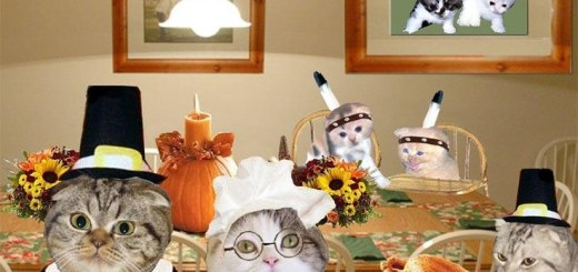 Thanksgiving Cats