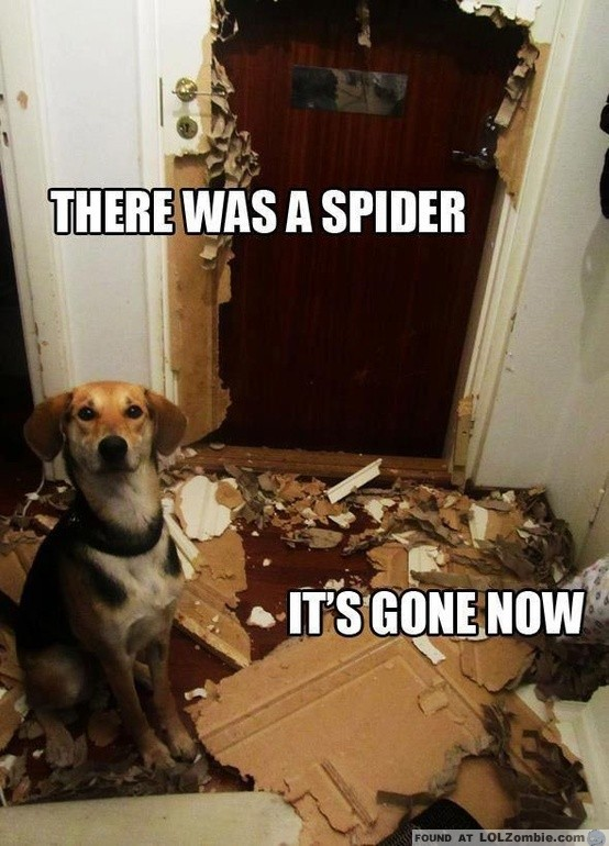 Dog Destroyed Room
