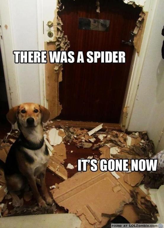 Dog Destroyed Room