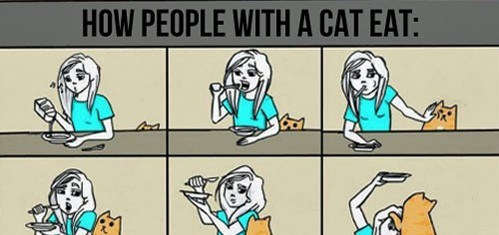 Eating With Cats