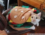 Eat up hamburger cat.
