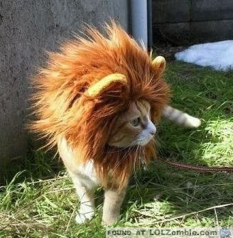Rawwr. Lion cat.