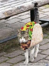 Mmmm Taco Cat. Looks so yummy.