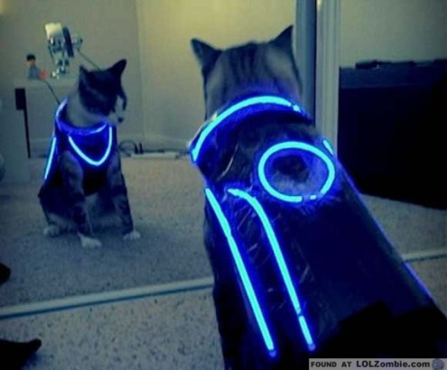 Tron cat glows. He's kind of amazing.