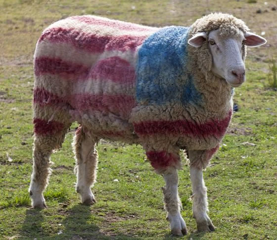 Why wouldn't you dye your sheep? I would if I had one.