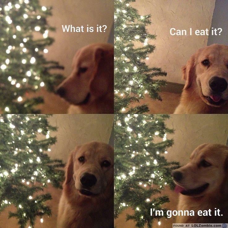 Dog Christmas Tree