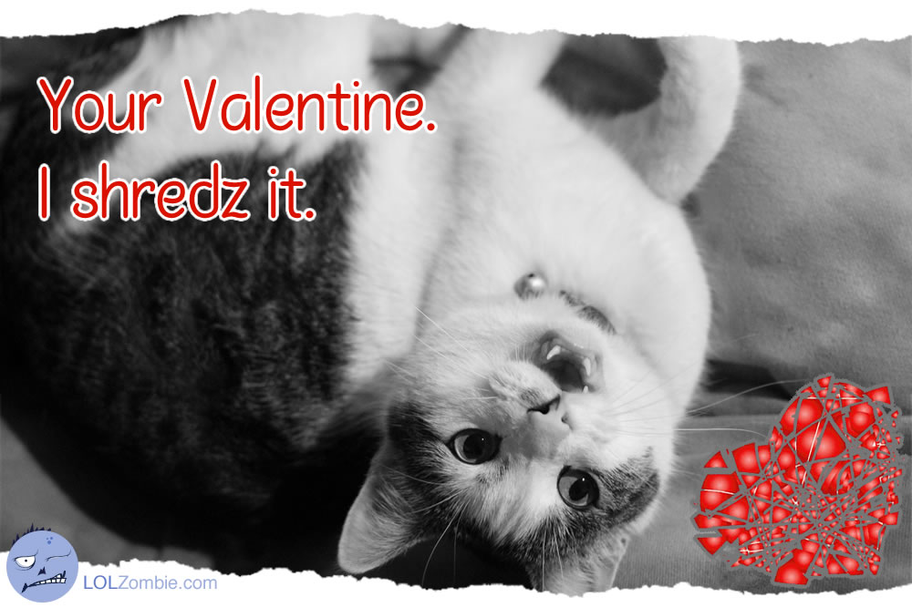 Your Valentine Cat