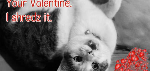 Your Valentine Cat