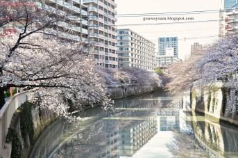 Sakurabana a Tokyo