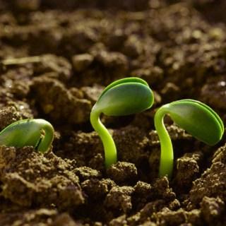 Fertilizzanti bio, con i lombrichi fai il pieno di Potassio a costo zero