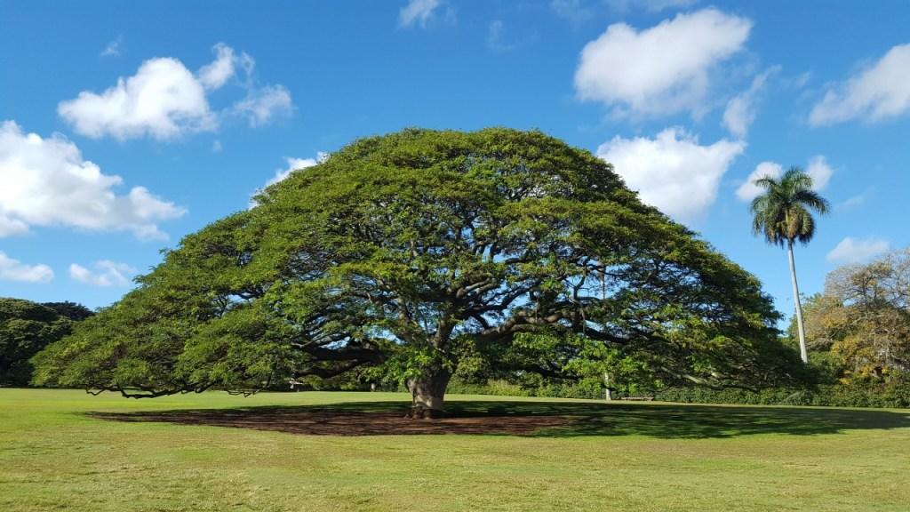 この木なんの木|日立の樹