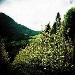 Apfelplantagen in der Nähe der Seiser Alm