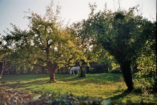 5 liebste Orte in Deutschland - Potsdam (c) Lomoherz
