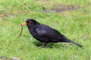 Artificial lawns offer freedom from the burden of worms and blackbirds